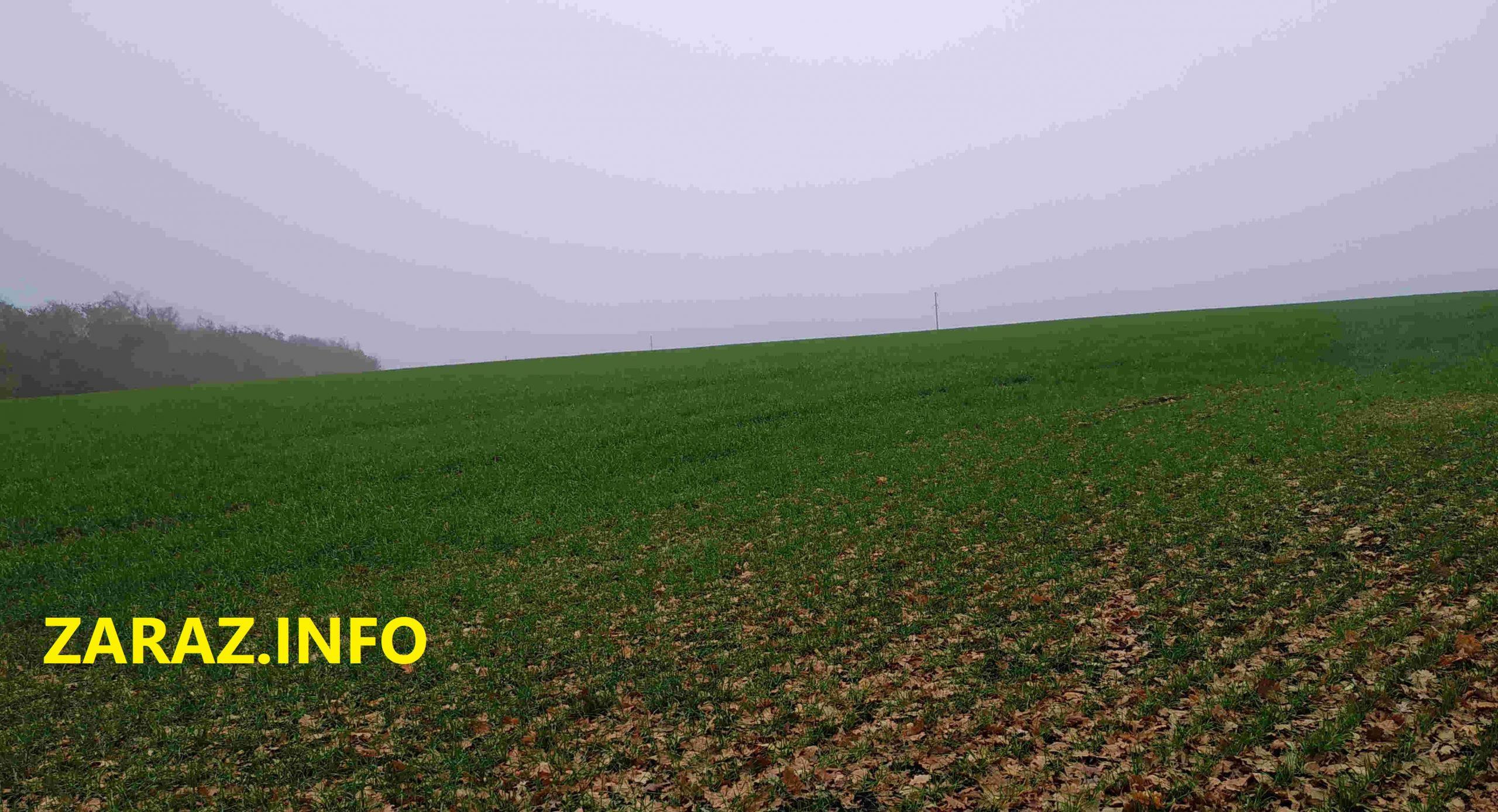 земля поле рожь пшеница